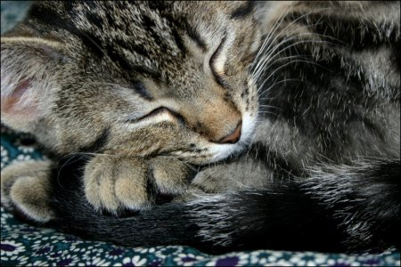 Curled_up_by_Tijgerkat